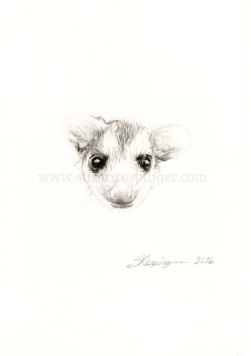 Possum Head