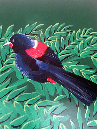 Saddleback Bird