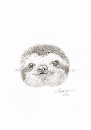 little sloth head drawing susan respinger