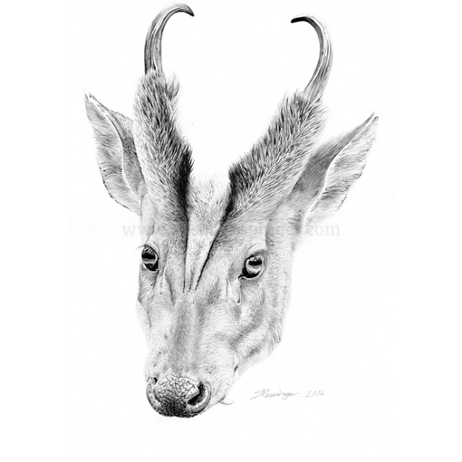 Horned and Fanged Deer